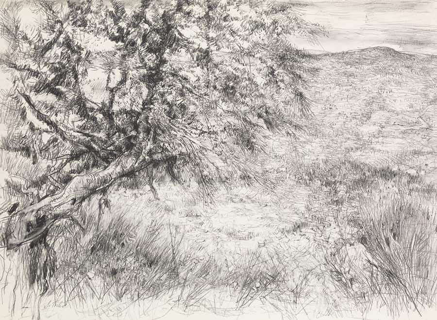 Judean Hills (1972), Charcoal on paper 100x70 cm, Anna Ticho at Manofim Festival in Jerusalem